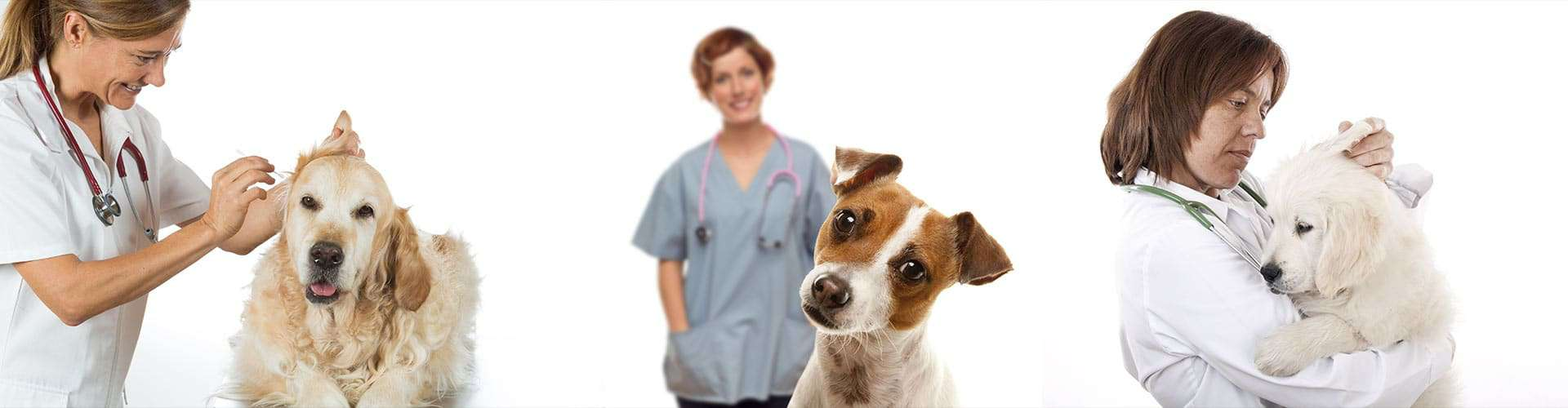 Dog Ear Cleaning Glen Ellyn, IL