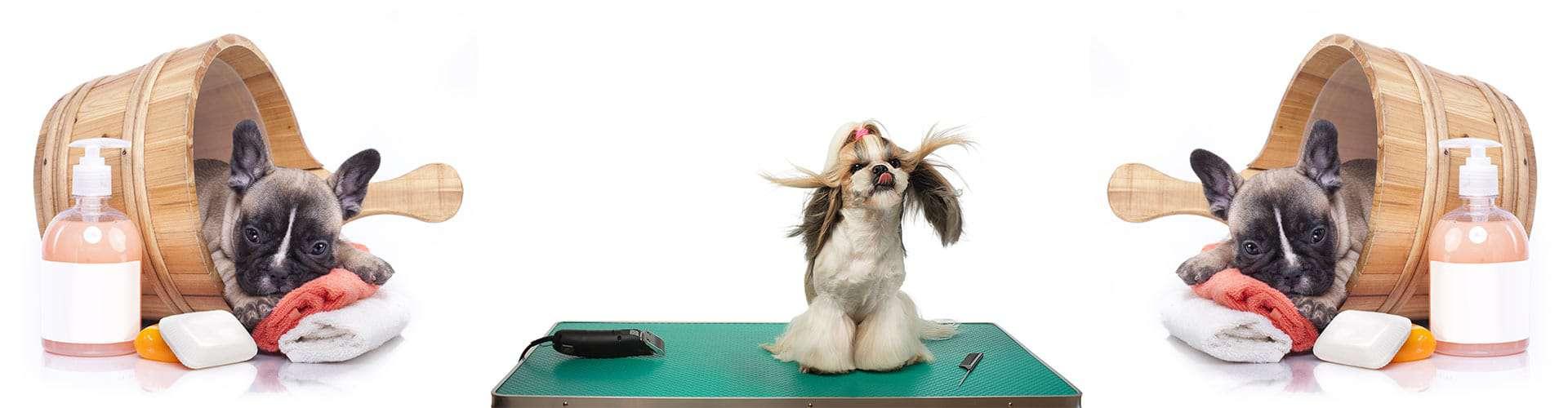 Dog Grooming Glen Ellyn, IL