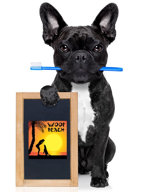 Dog Teeth Brushing Glen Ellyn, il woofbeach cove