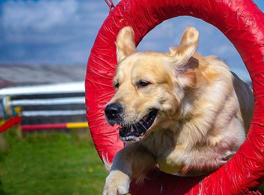 WOOFBEACH COVE Dog Training Glen Ellyn, il