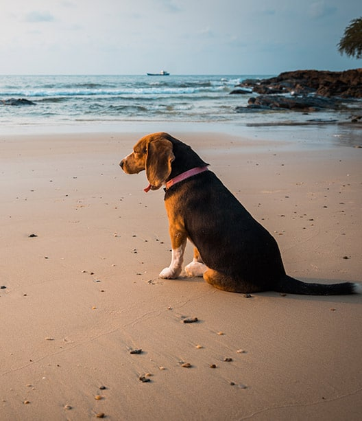 dog training glen ellyn WoofBeach cove services