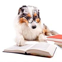 dog training WoofBeach cove glen ellyn, il