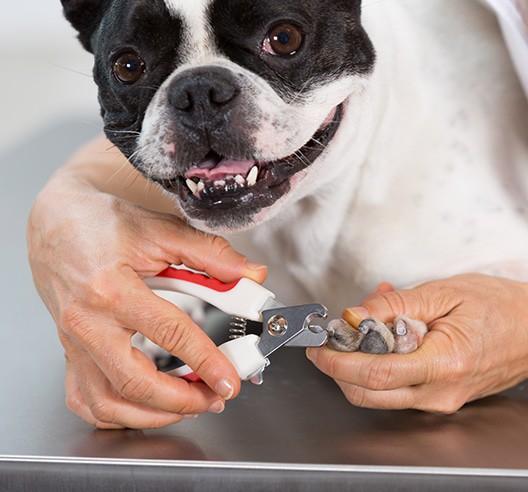 glen ellyn dog grooming nail clipping