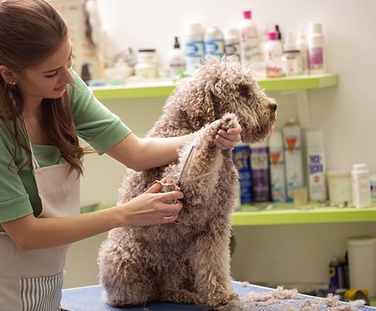 glen ellyn dog grooming woofbeach