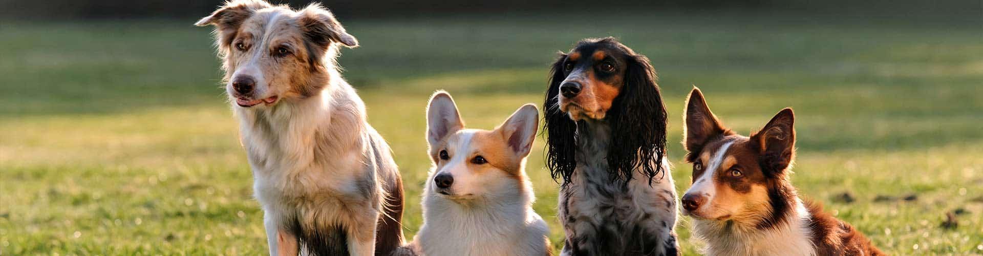 Dog Training Glen Ellyn, il